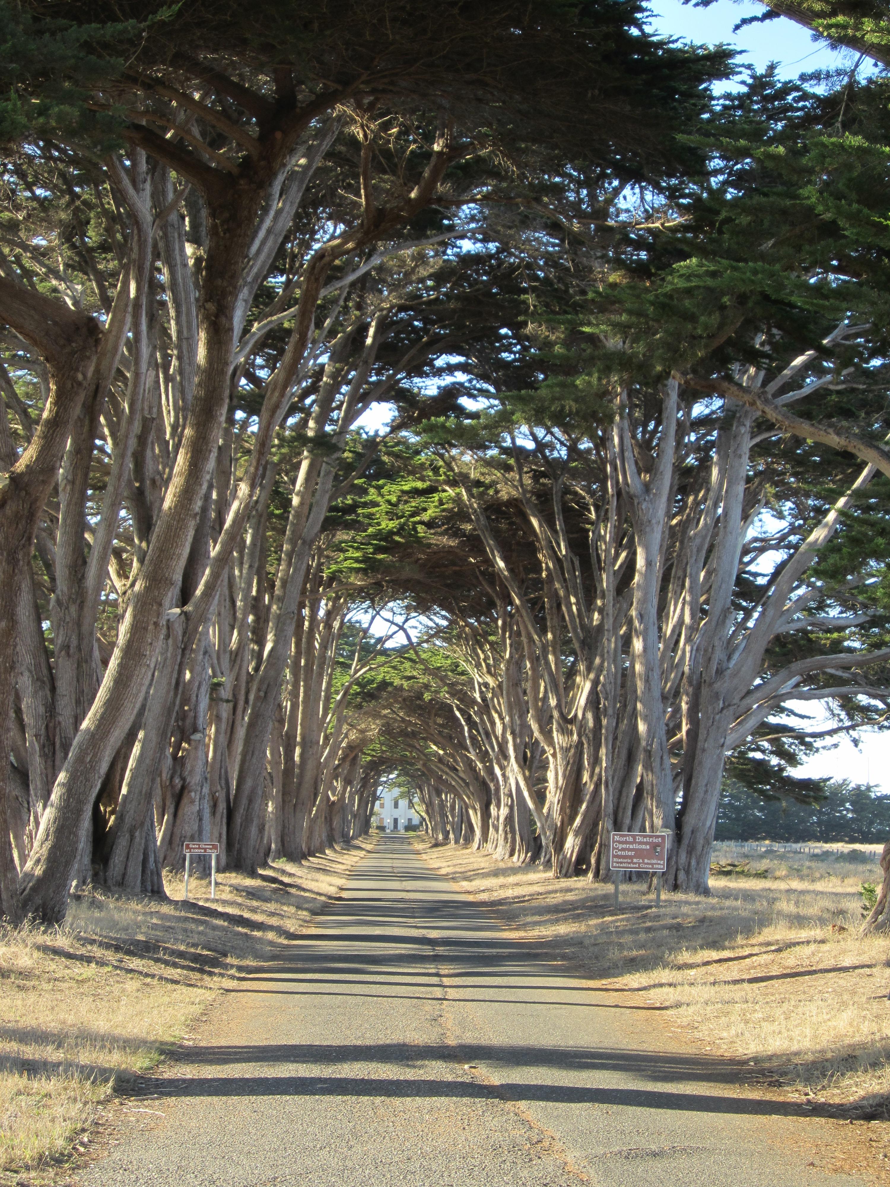 Tree Lined St.en Route