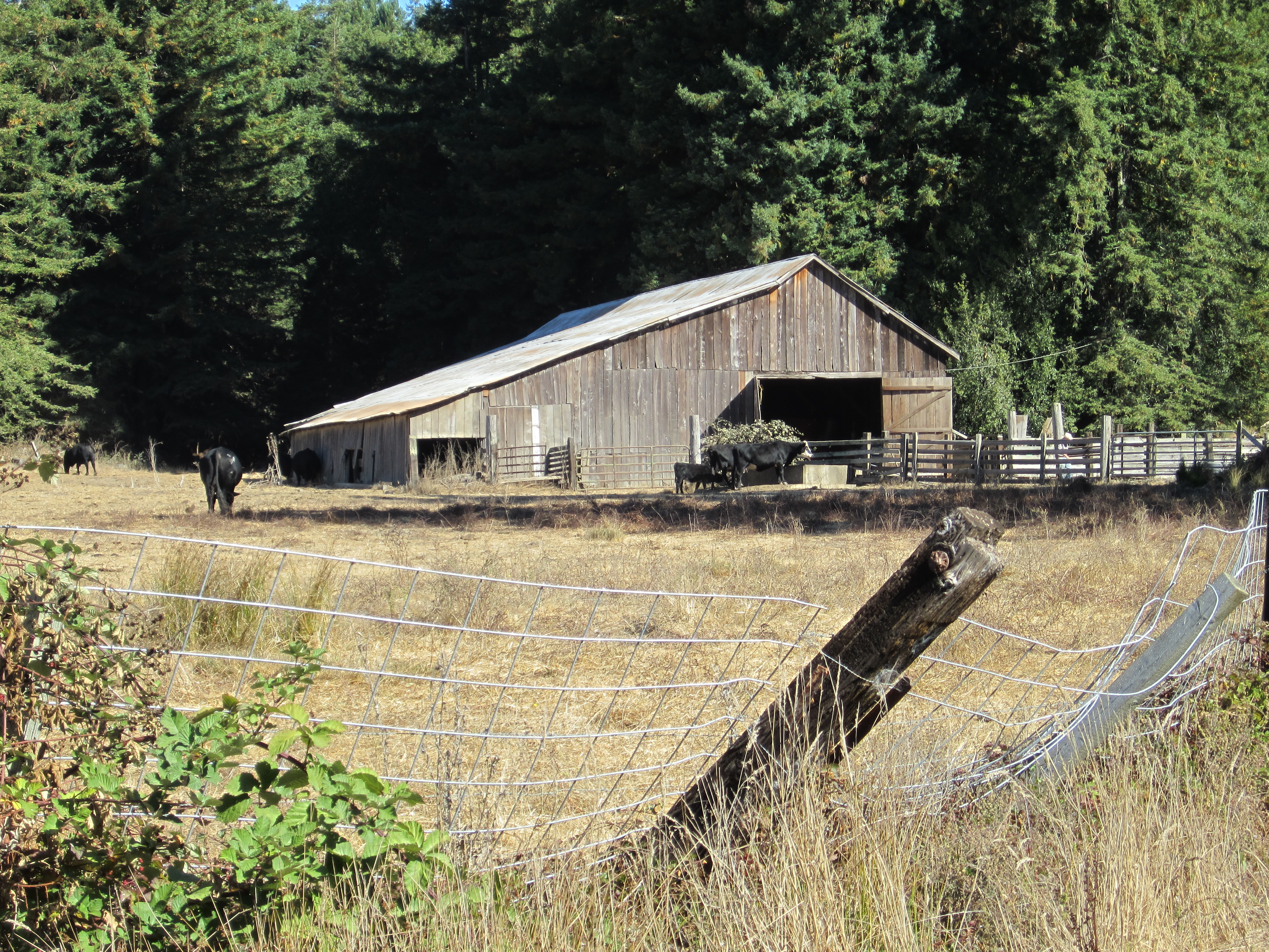 Barn in Bodega Bay