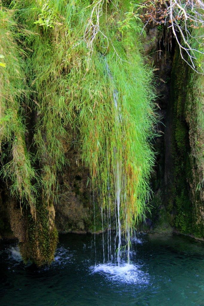 Moss hanging off a ledge -Plitvice