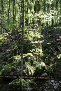 Dappled sunlight in the forest of Soča Valley