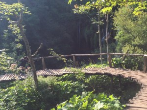 Beautiful arching wooden bridge through the flora and fauna of Plitvice