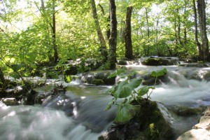 Rushing waters of a river at Plitvice