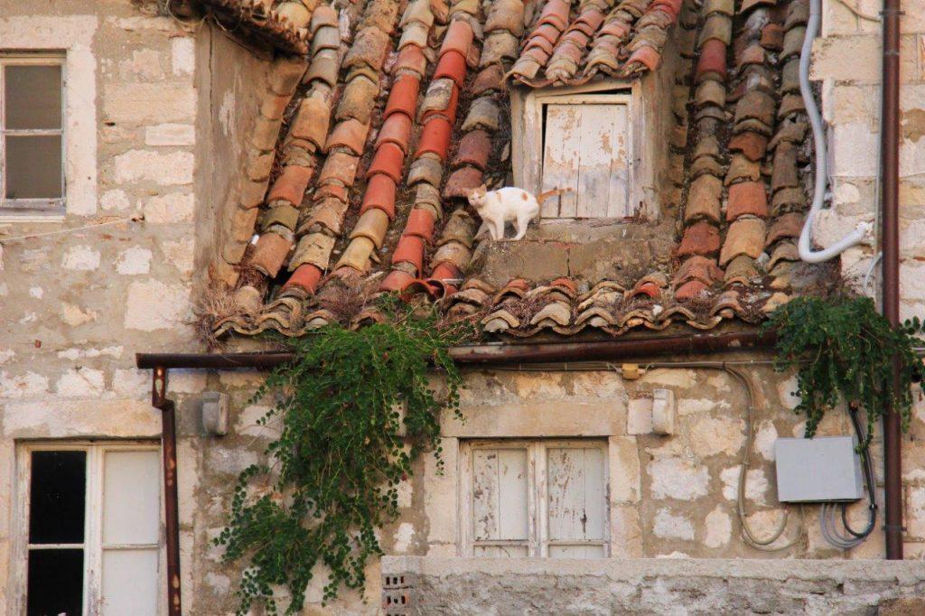 Cat Dubrovnik