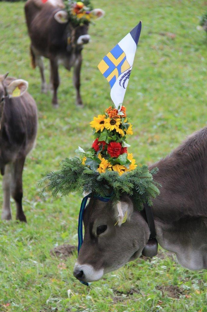 Cow Flims AlpAbzug