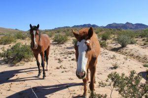 wild horses along SSR167