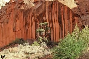 High cliff walls in Capitol Reef