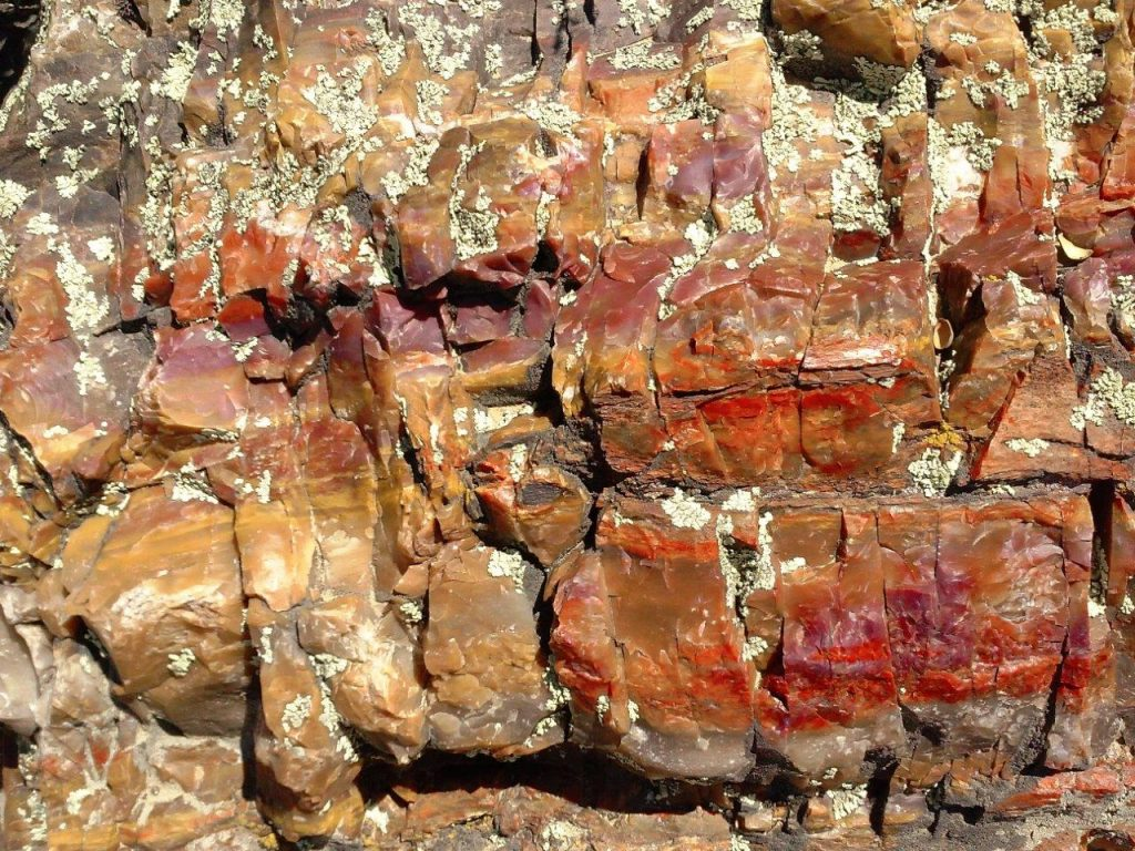 Amazing colors in petrified wood at Petrified Forest State Park, UT