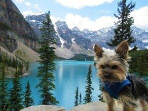 JoJo the tiny wonderdog at Moraine Lake