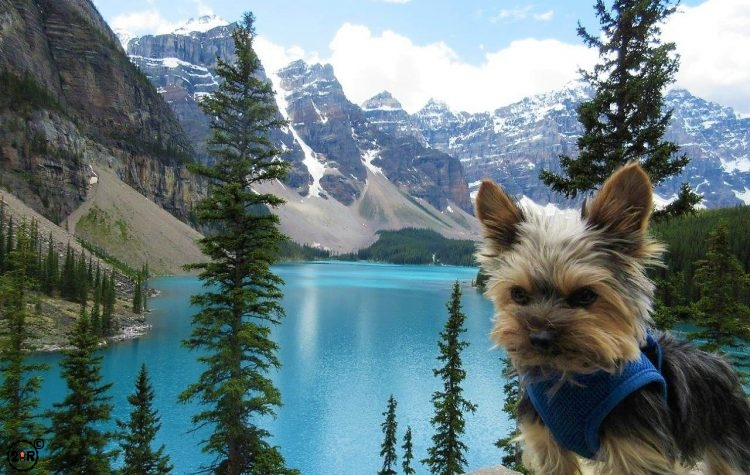 JoJo the tiny wonderdog at Moraine Lake